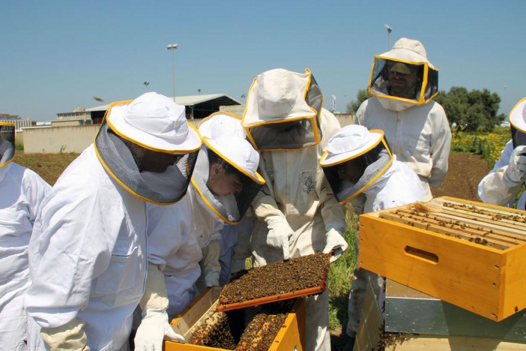 mondo delle api