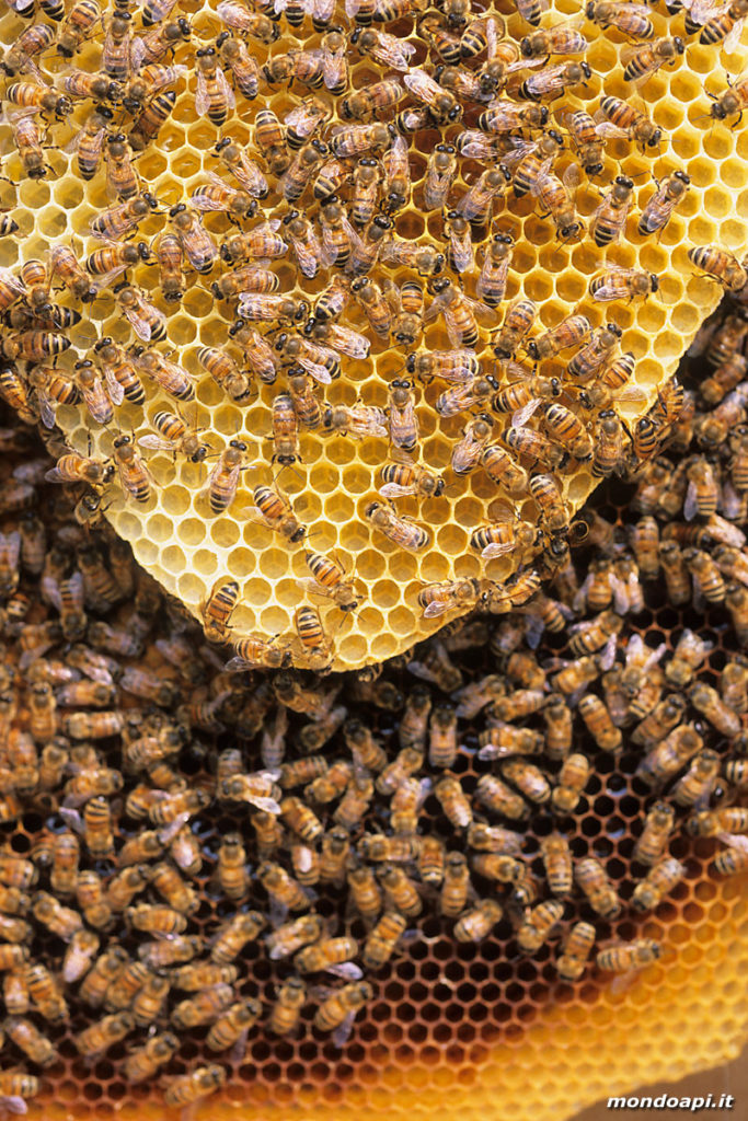 visione di un favo naturale di cera d' api