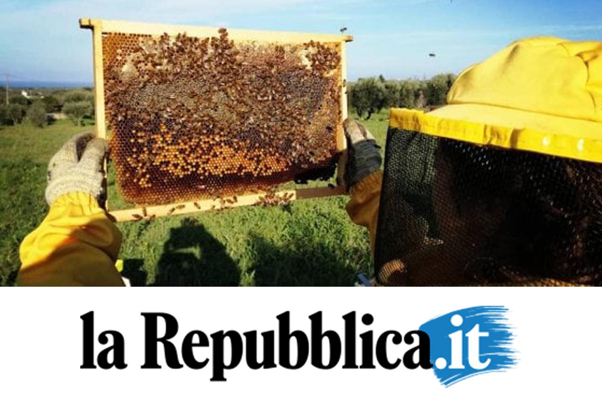 foto-apiario-1-960x720 copia