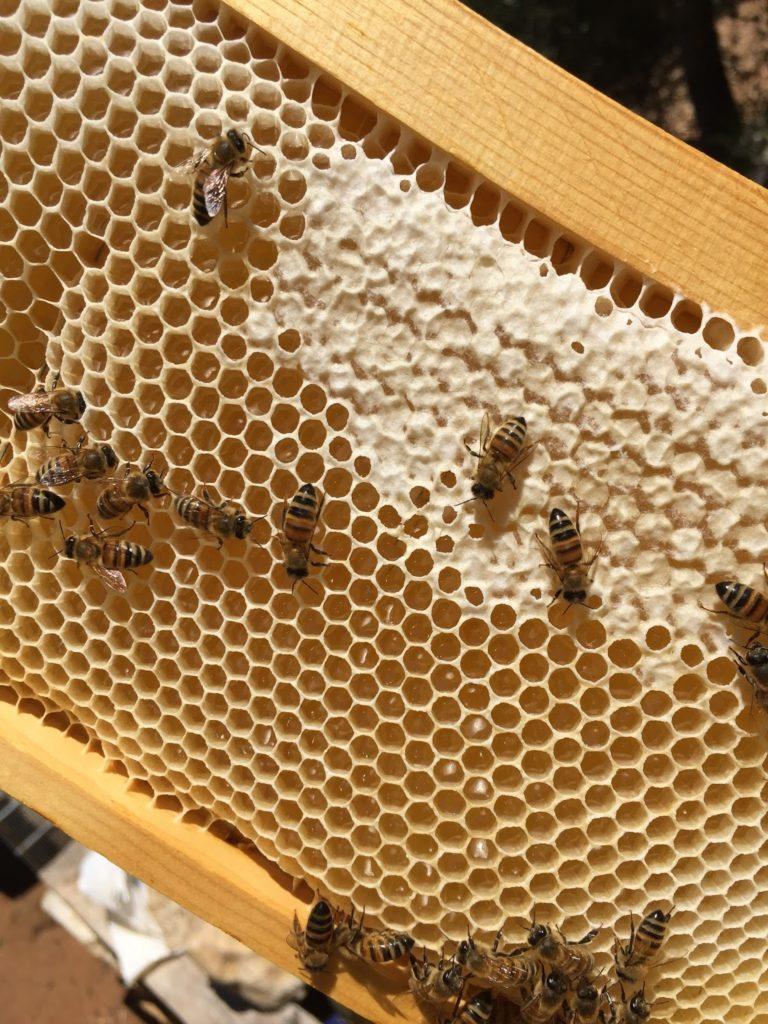 miele opercolato e miele giovane